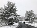 2018-03-21 12 02 00 View west along a slushy Virginia Willow Drive (Virginia State Route 7146) as it passes two snow-covered Eastern White Pines in the Franklin Glen section of Chantilly, Fairfax County, Virginia.jpg