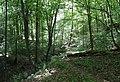 20180522120DR Dohna Naturschutzgebiet Spargrund.jpg