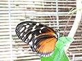20180825 Vlinders aan de Vliet 10.jpg