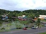 2019-01-30 Pacific Harbour, Viti Levu, Fiji 5.jpg