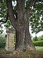 2019-07-16 Esche auf dem Friedhof in Kleinfurra (Thüringen).jpg