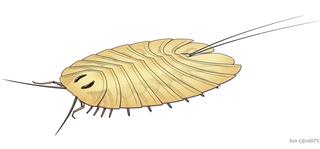 Cheloniellida Order of arthropods (fossil)