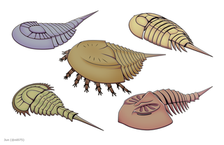 Synziphosurina Group of arthropods
