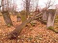 21 listopada 2013 - cmentarz żydowski kon XVII Szydłowiec - 5.jpg