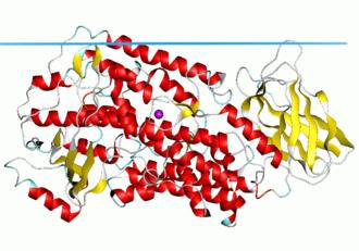 Lipoxygenase - Image: 2p 0m