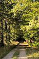 73-245-5004 Storozhynec park DSC 6050.jpg