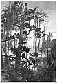 A Buzzard Roost by A. Lindsay.jpg