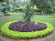 A beautiful plant at Lahore Zoo.jpg