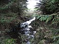 A forest watercourse - geograph.org.uk - 303349.jpg