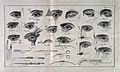 A sheet showing optical instruments, eye examinations, and d Wellcome V0015921.jpg