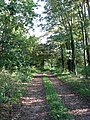 A track into the woods - geograph.org.uk - 599400.jpg