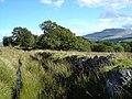 A well defined footpath - geograph.org.uk - 547630.jpg