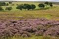 Across Cruglwyn - geograph.org.uk - 930001.jpg