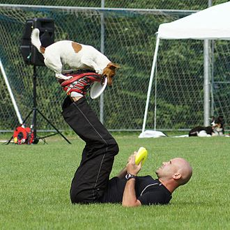 Disc dog - Adrian Stoica and THINKERBELL: European Champion Skyhoundz 2014 (Microdog)