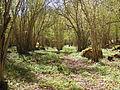Aggarön, hasselskogen i sydöst.JPG