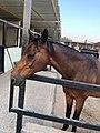 Al-Aryan Equestrian center.jpg