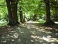 Alejka parkowa - panoramio (1).jpg