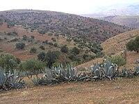 Algérie 2006 049.JPG