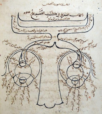 The structure of the human eye according to Ibn al-Haytham. Note the depiction of the optic chiasm. --Manuscript copy of his Kitab al-Manazir (MS Fatih 3212, vol. 1, fol. 81b, Suleymaniye Mosque Library, Istanbul) Alhazen1652.png