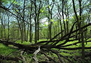 Robert Allerton Park - The Allerton nature preserve is a National Natural Landmark