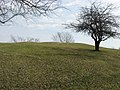 Alligator Effigy Mound from the south.jpg