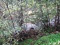 Alnetum Bistarska reka 4.JPG