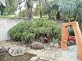 Aloe plicatilis (L.) Mill. (AM AK309110-4).jpg