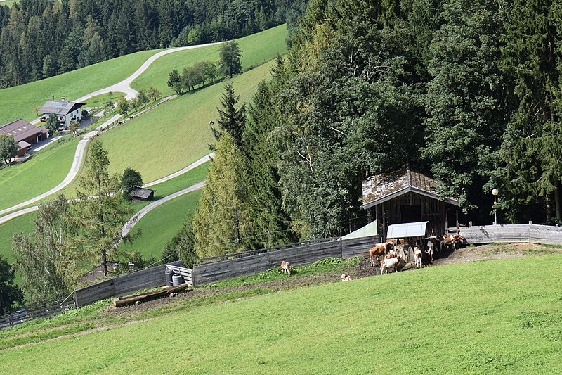 File:Alpine pastures (23120716381).jpg