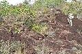 Alto Araguaia - State of Mato Grosso, Brazil - panoramio (1106).jpg