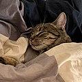 Amir-cat.jpg