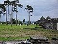 Ancient Trees, Rathfern Way - geograph.org.uk - 1394150.jpg