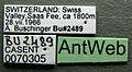 Anergates atratulus casent0070305 label 1.jpg