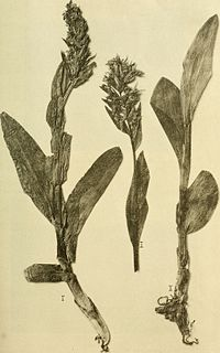 Annalen des K.K. Naturhistorischen Hofmuseums (1914) (18196503932).jpg