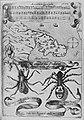 Antidotum tarantulae.jpg