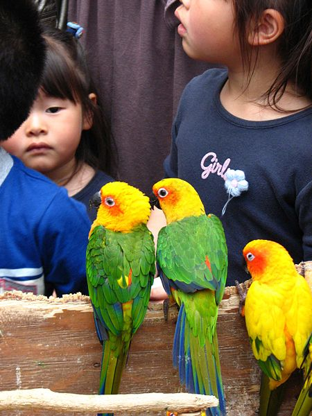 Parrot Forum • View topic - How To Overcome One Person