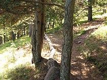 Arboretum Marcel Kroenlein, sentier n° 5.JPG
