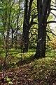 Arboretum Zürich 2011-04-10 18-06-34.JPG