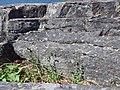 Arenaria serpyllifolia (8489347473).jpg