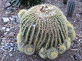 Arizona Cactus Garden 009.JPG