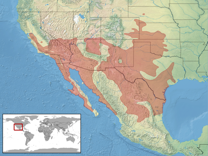 [Fiche] Arizona elegans ssp   800px-Arizona_elegans_distribution