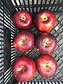 Artemisz (apple cultivar).jpg