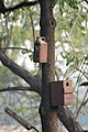 Artificial nest box for birds by Raju Kasambe DSC 8039 (1) 10.jpg
