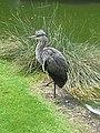 Artis Zoo - Bird (7516949790).jpg