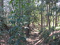 Ashgrove enoggera creek res 2.jpg