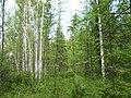 Asinovsky District, Tomsk Oblast, Russia - panoramio (126).jpg