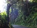Aspal dan hutan.jpg