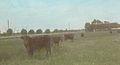At a larger Farmstead (4815149167).jpg