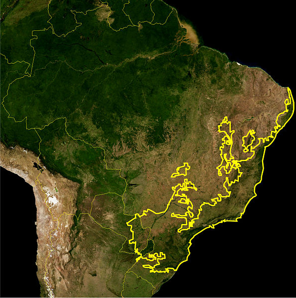 Plik:Atlantic Forest WWF.jpg