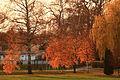 Autumn Glow (4131469252).jpg