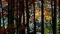Autumn color leaves.jpg